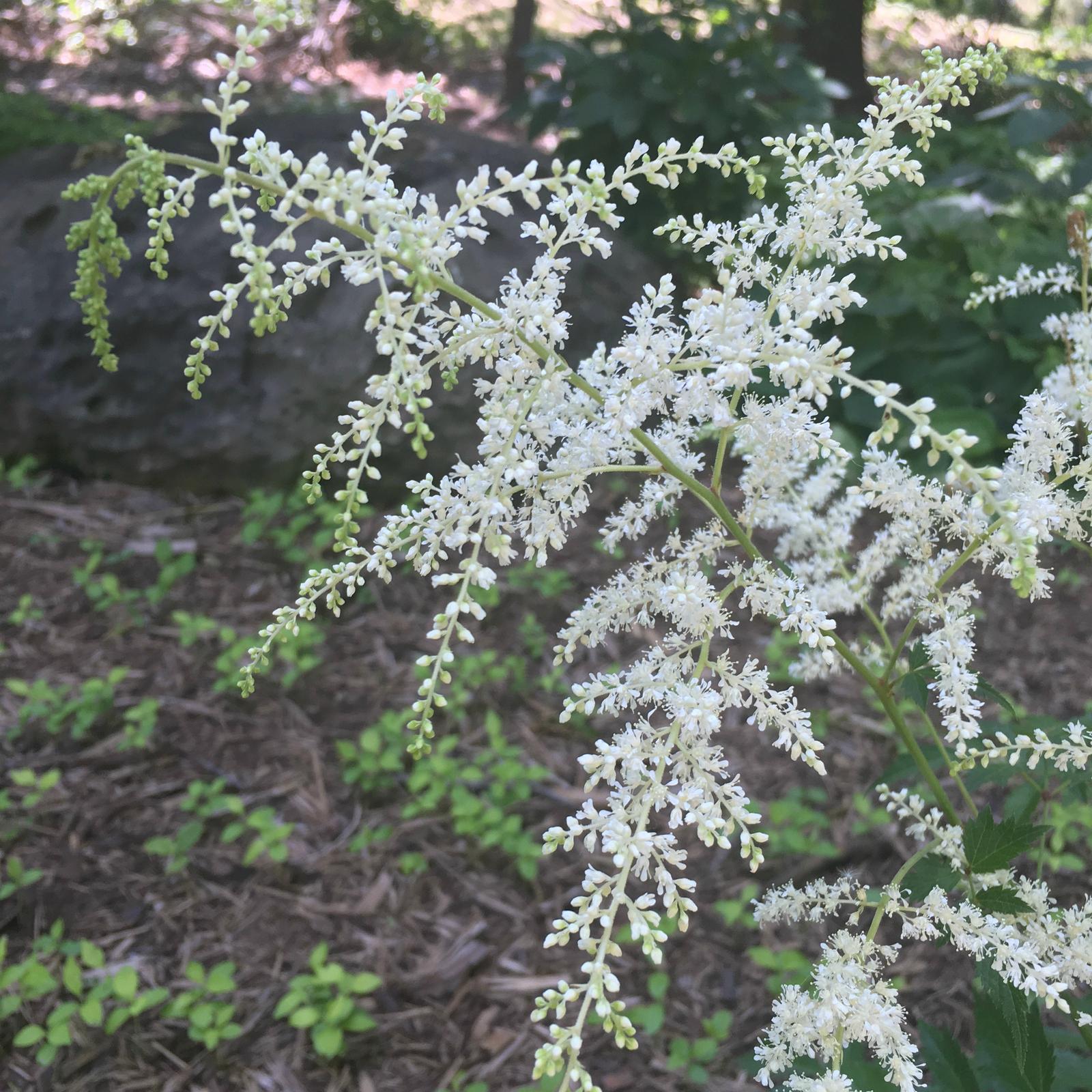 JS Weddings and Events, Grand Rapids Wedding Planner and Floral Designer - My Cutting Garden, My Flower Garden